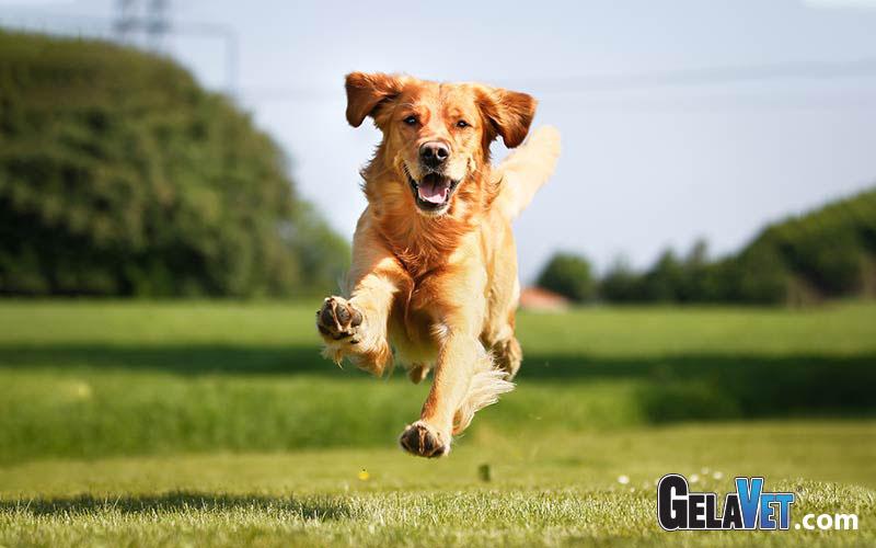 Ishrana pasa - pravilna ishrana psa